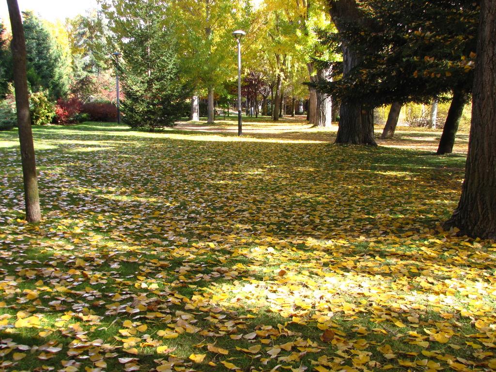 Las hojitas de otoño